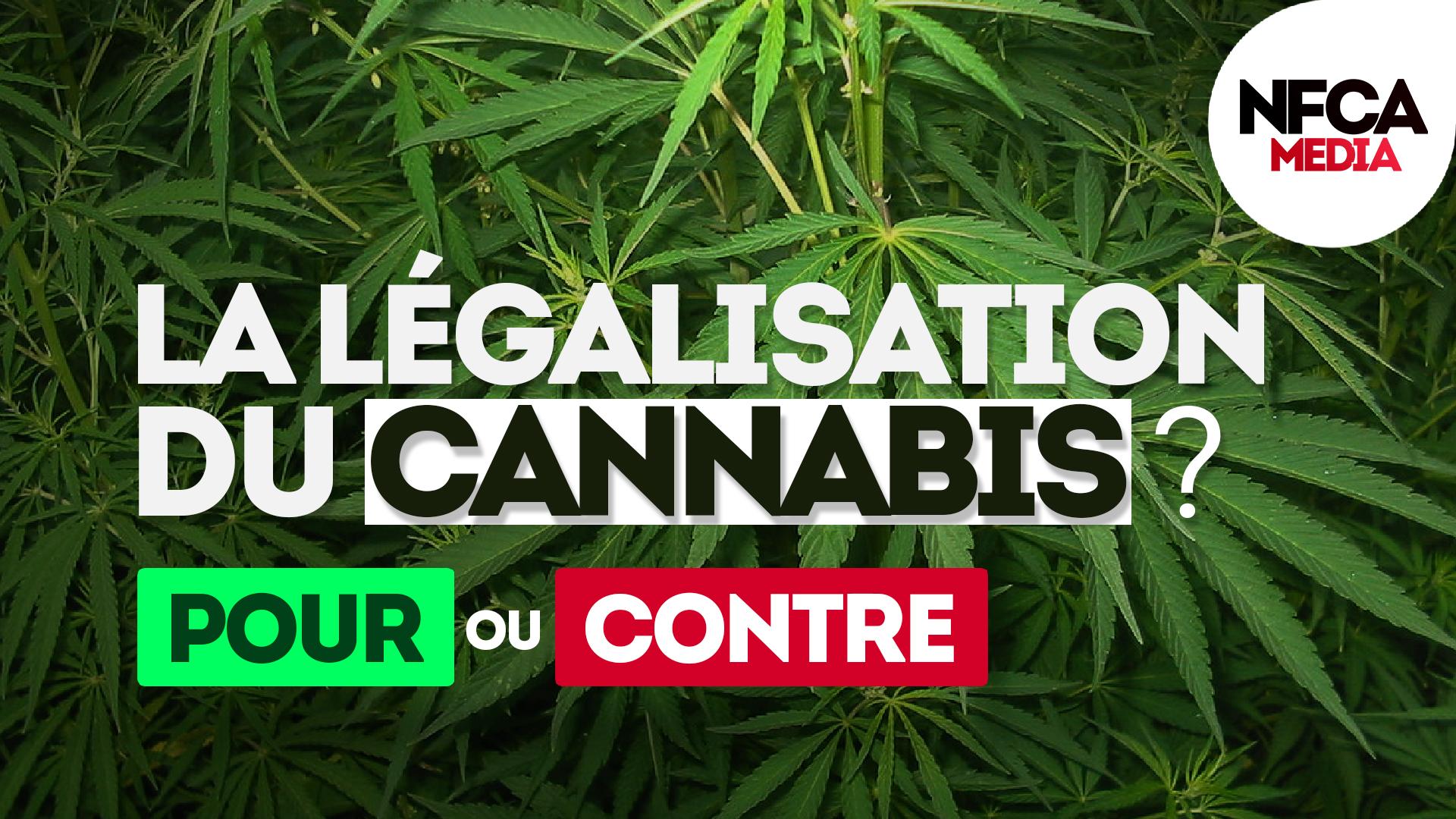🎤 Micro-trottoir : Pour ou contre la légalisation du Cannabis ?